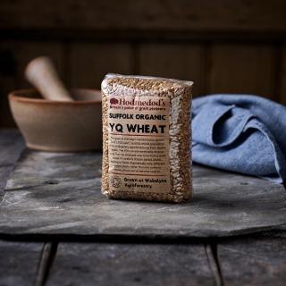 Hodmedod's Suffolk Organic YQ Wheat Grain